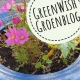 Greenwish Groenblog | Dailygreenspiration